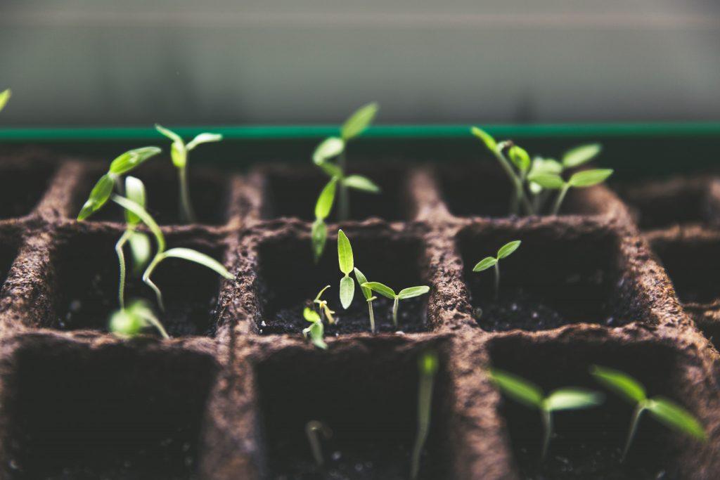 grow original ideas
